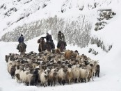 Winter Pasture: Book describing hardships endured by ethnic Kazakh herders of Xinjiang now available to wider audience