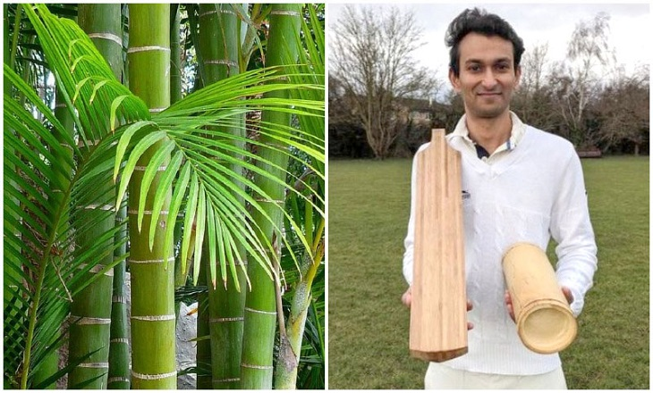 Bamboo bats could revolutionise cricket: study