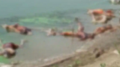 Covid panic in Bihar as over 40 bodies wash up on banks of Ganga