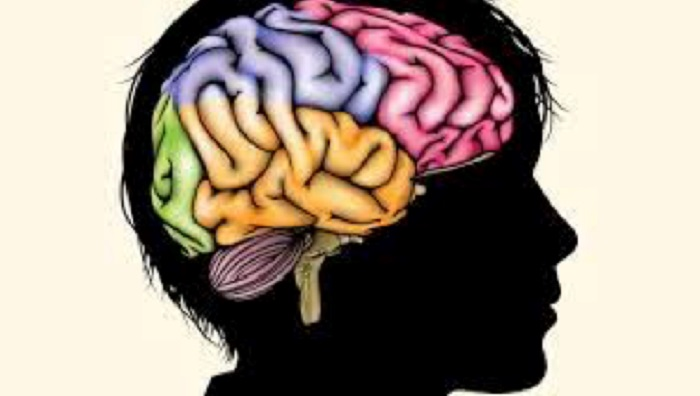 Social-Emotional Learning and Brain Development