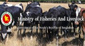 Fisheries and livestock ministry brings 3500,000 Foot and Mouth disease vaccines from Russia