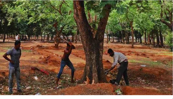 Stop tree cutting at Suhrawardy Udyan till May 20: HC