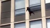 Chicago cat fleeing fire survives 5-story jump, walks off