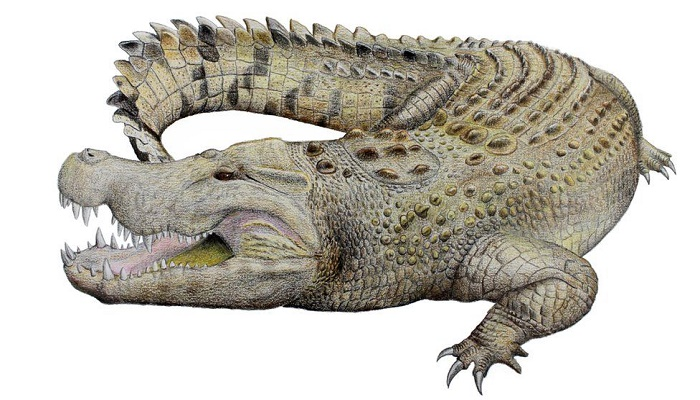 Australia crocodile: Skull identified as part of new extinct species