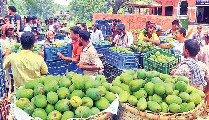 Mango trading starts getting vibrant in Rajshahi markets