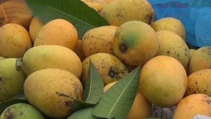 Europe to soon feast on luscious  Bangladeshi mangoes