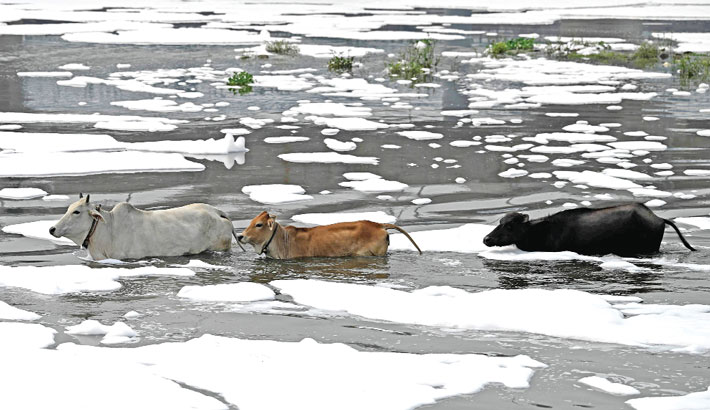 The polluted waters of river Jamuna covered with