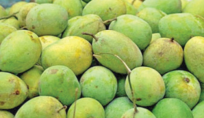Over 500 tonnes of mango to be exported to Europe