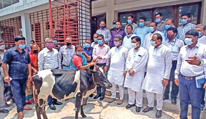 Jatiya Sangsad whip Abu Sayeed Al Mahmud Swapon distributes cattle among