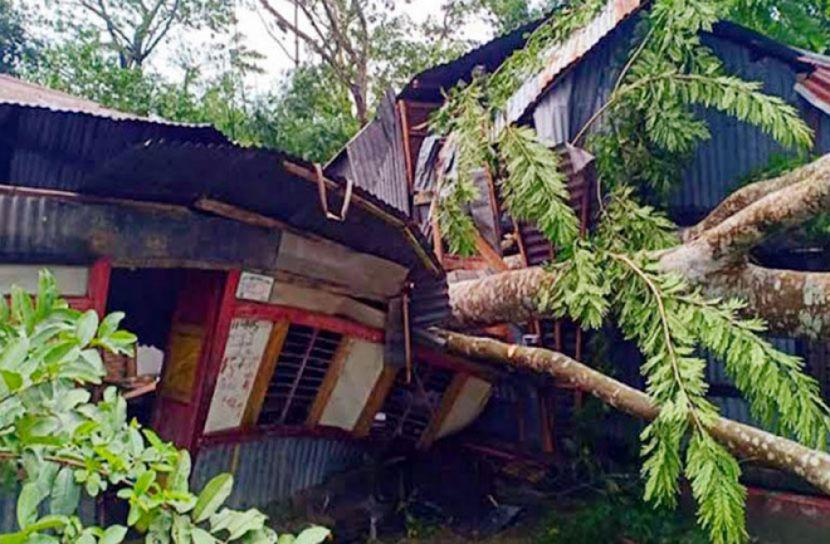 Man dies as tree falls on him in Bhola