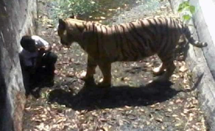 Tigers kill two zookeepers in separate China attacks