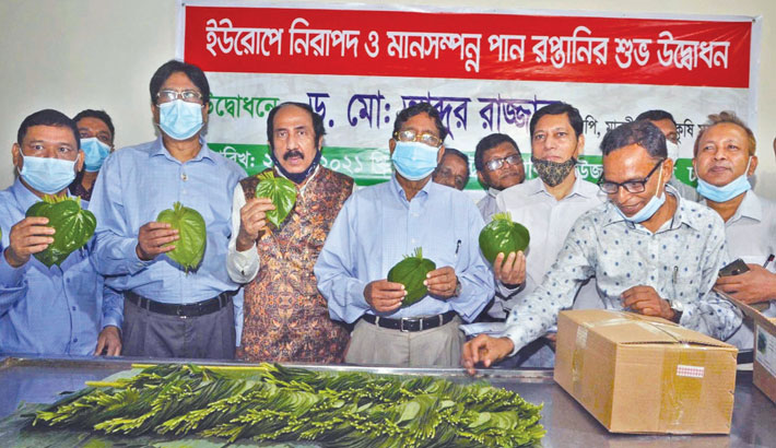 Betel leaf export to Europe resumes after 7 years
