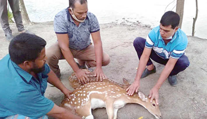 Forest guards take care of two deer