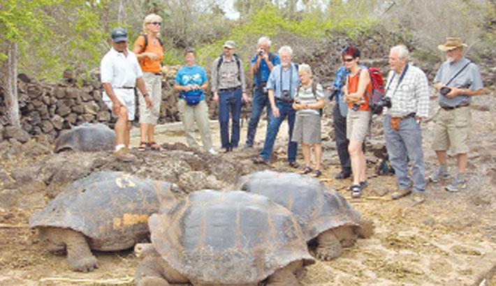 'Galápagos tortoise species not extinct'