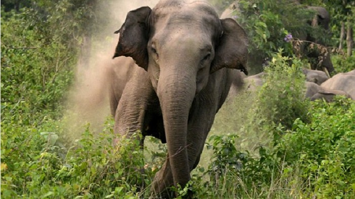 Garo man trampled to death by elephant in Sherpur