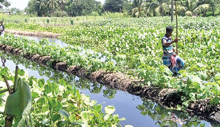 Agro-ecology of floating and organic sack farming
