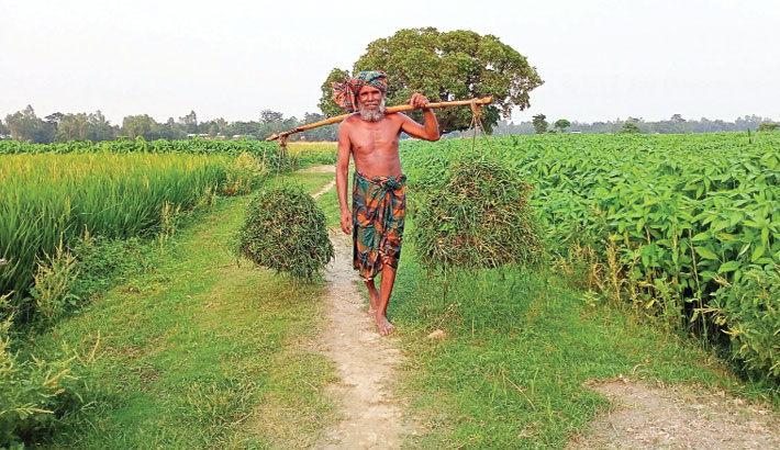 A farmer is carrying home grass