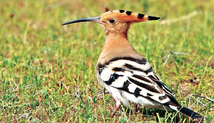 French bird species face 'unrelenting' decline