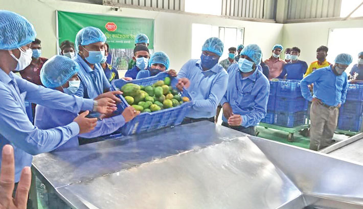 PRAN to procure 60,000 tonnes of mangoes