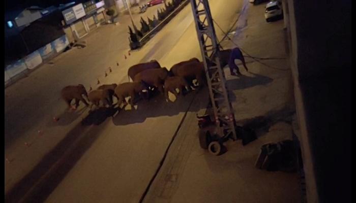 Trucks line roads to block wild elephants in SW China