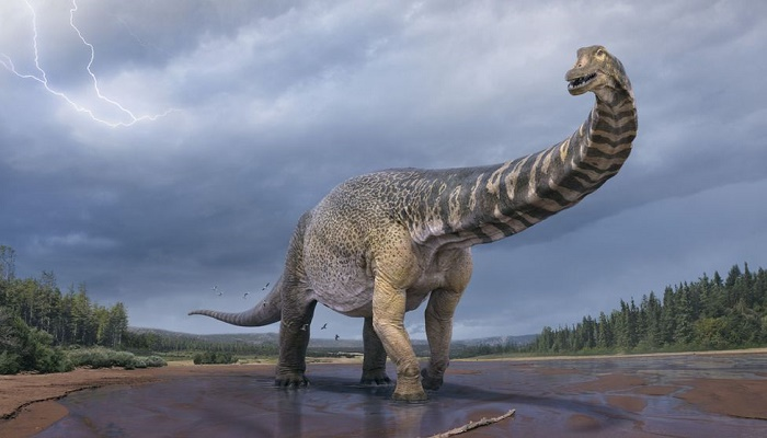 Scientists say new dinosaur species is largest found in Australia