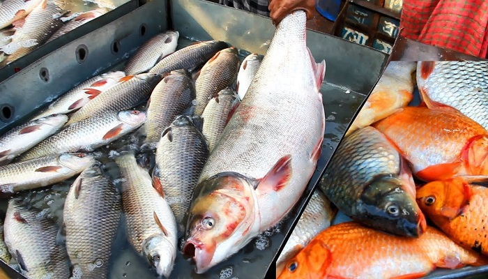 Organic certification helps Bangladesh expand fish market in Germany