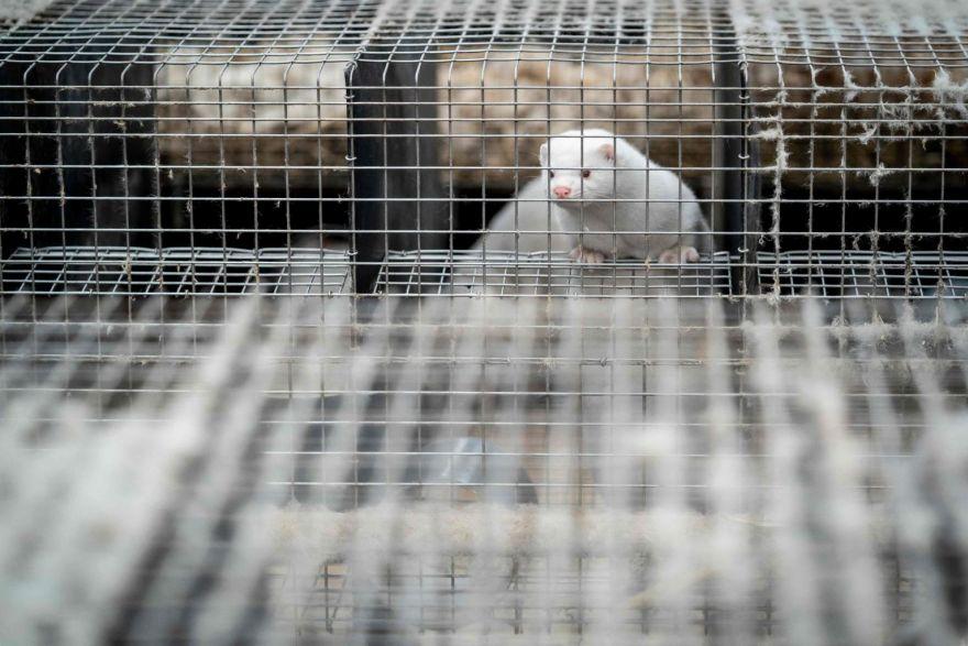 China Markets Sold Mink, Civets, Stoking Natural Origins Theory
