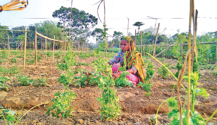 A female worker is taking care of bitter gourd plants