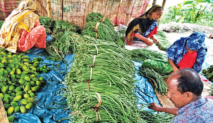 A farmer and his family members are sorting his produced vegetables to sell in the local market