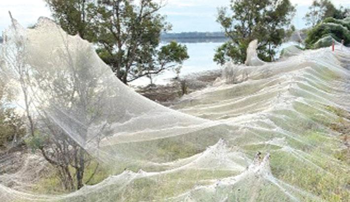 Spider webs blanket Australian landscape