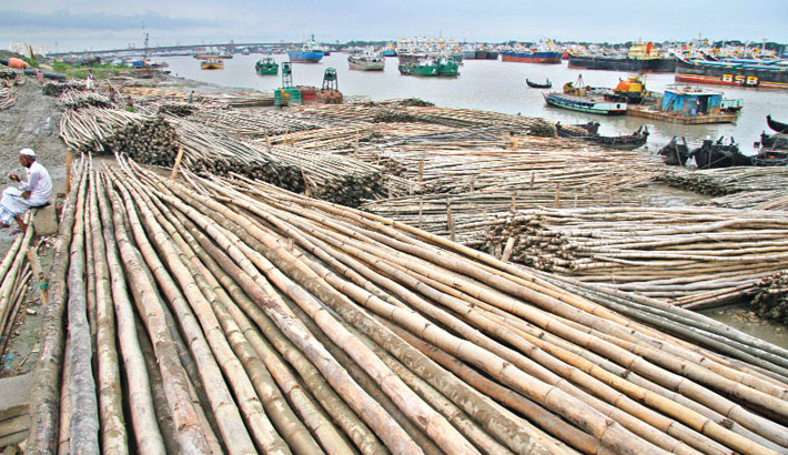 Traders put on display an array of bamboos in Karnaphuli Bridge Ghat area of Chattogram city for sale. This kind of bamboo is issued for construction work. A bamboo sells at Tk 100-200 based on its size. The photo was taken on Wednesday.—Rabin chowdhury