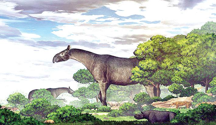 Ancient giant rhino was 'taller than giraffe'