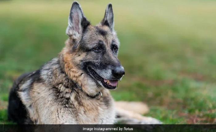 Bidens' dog Champ, 'cherished companion,' dies