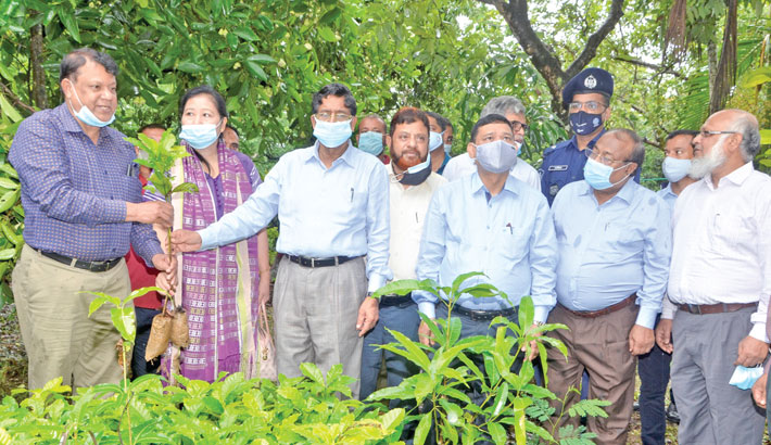 Tk 2.11bn project to develop cashew nut, coffee farming