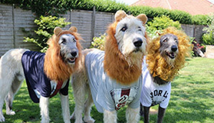 Football-mad dog owner dresses pets as three lions to support England
