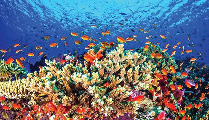 Great Barrier Reef 'in danger': UNESCO