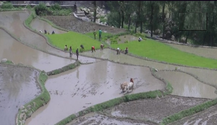 Farmers in J-K's Rajouri rejoice as water for irrigation reaches remote areas