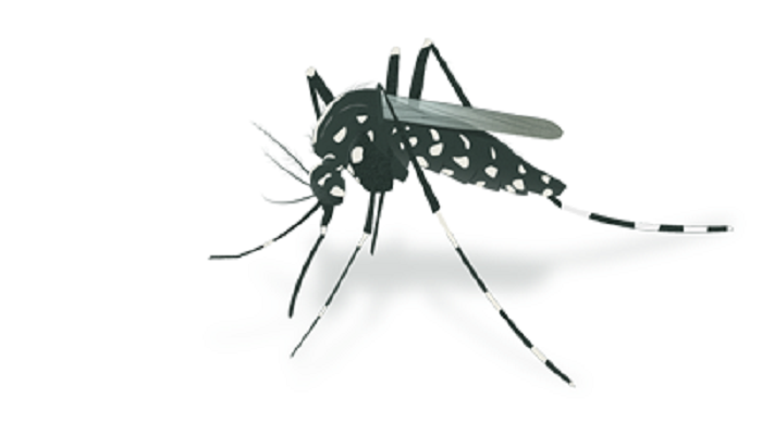45 dengue patients undergoing treatment at Dhaka hospitals: DGHS