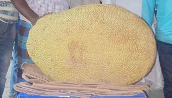Jackfruit weighing 65kg sold at Tk 2,300 in Kishoreganj