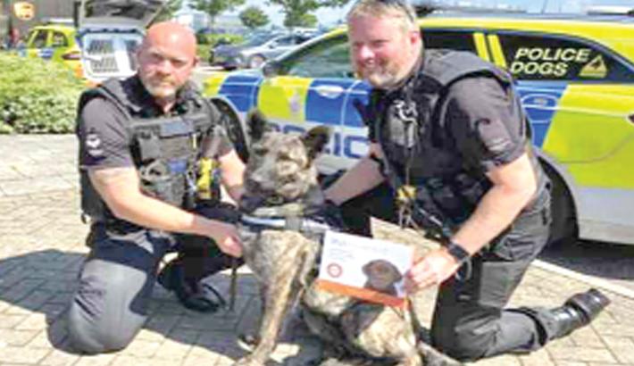 UK police set up dog DNA database