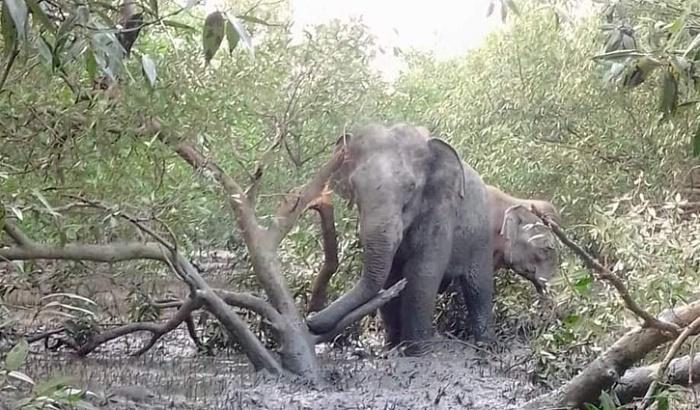 2 elephants cross into Bangladesh through Naf river