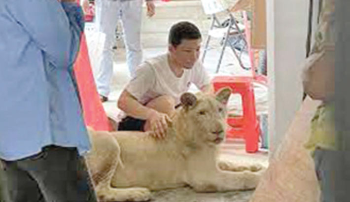 Pet lion of Chinese owner confiscated