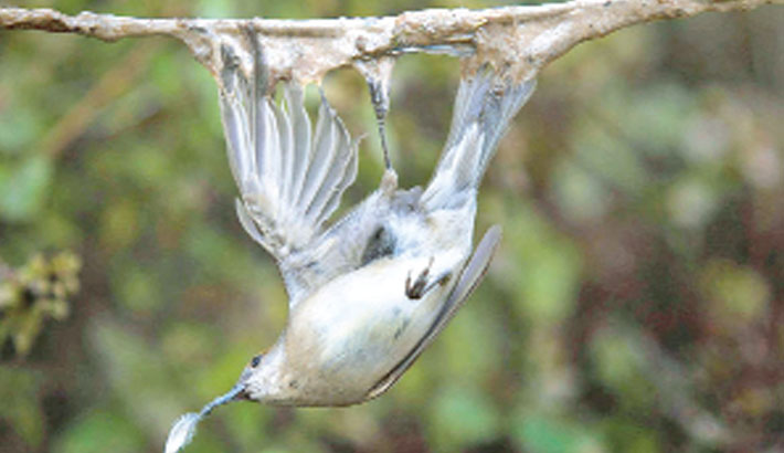 France bans glue trapping of birds