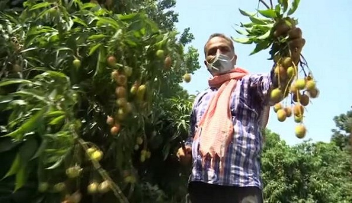 Litchi Farmers in Jammu District Celebrates More Profits and Income Gain From The Crop.