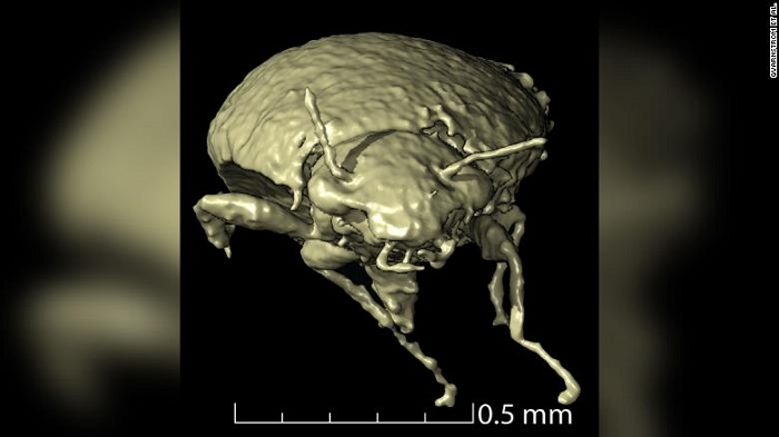 In fossilised dinosaur poop, scientists find hidden treasure