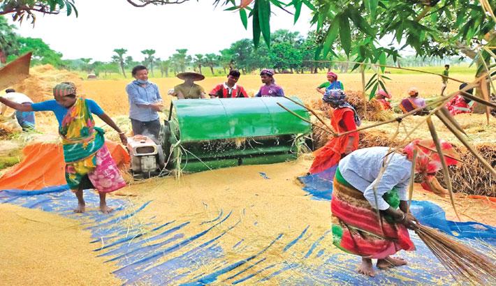 Govt procures 1.30 lakh tonnes of Boro rice in Rajshahi
