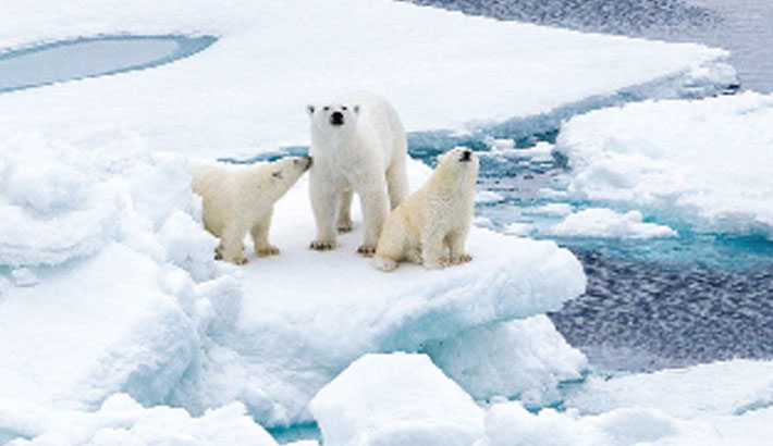 'Last refuge' for polar bears is vulnerable to warming