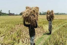 Lower Boro procurement forces govt to import rice