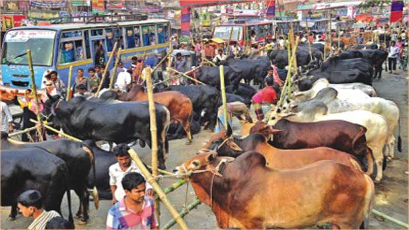 Cattle shortage during Eid-ul-Azha unlikely: DLS