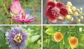 Flowers that love rain